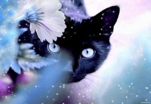 История про Кошку и ее Человека
