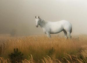 Символика Таро: Белый  конь